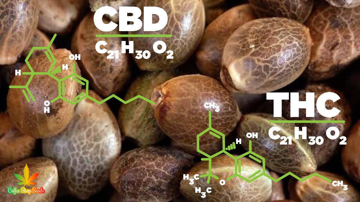 Cannabis Confidential – Comparing CBD and THC Compounds