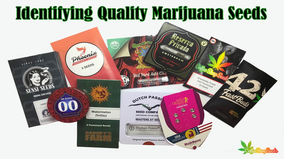 3 Effective Tips to identifying Quality Marijuana Seeds