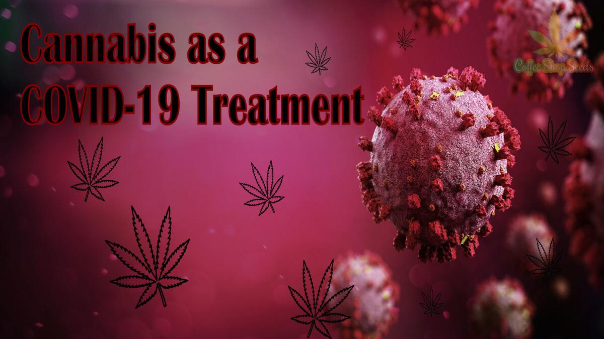 Cannabis as a COVID-19 Treatment
