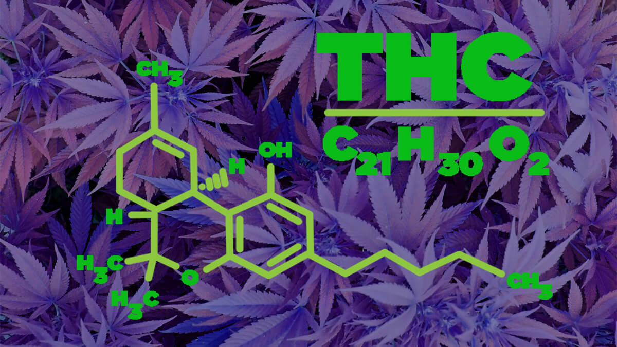 Are High THC Strains Better Than the Low THC Strains?
