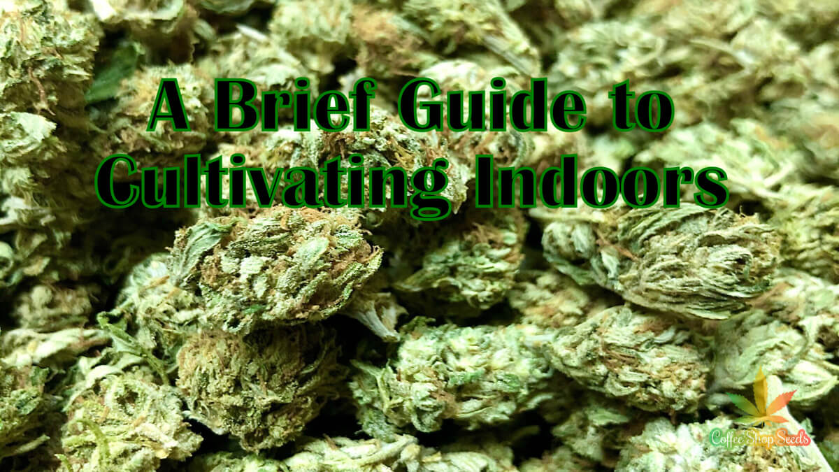 A Brief Guide to Cultivating Your Own Hemp/Cannabis Indoors