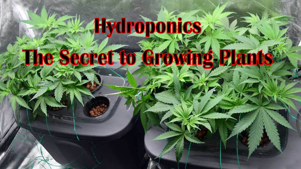Hydroponics – The Secret to Growing Plants You Need To Know