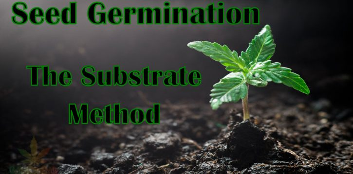 Cannabis Seed Germination Made Easy – The Substrate Method